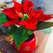 Poinsettia — Photo Courtesy Brian Wheat, AAF, PFCI, of Lafayette Florist, Gift Shop & Garden Center in Lafayette, Colorado. www.lafayetteflorist.com