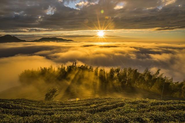 大崙山~茶園黃金雲海斜射光~ Tea farm Sunset