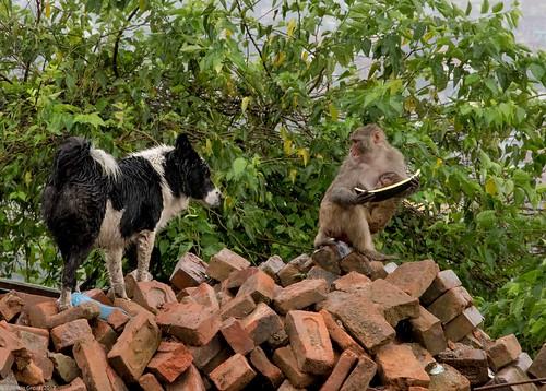 in Kathmandu_08 dog and monkey   by Valentin Groza