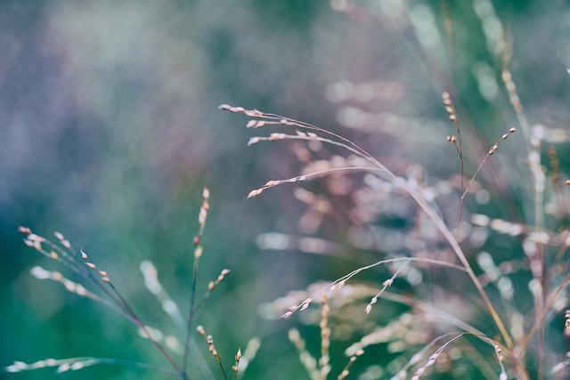 Grasses & Autumn