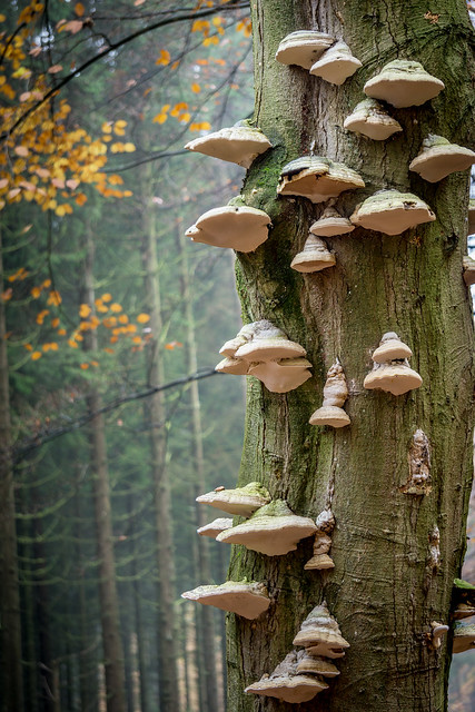 When the trees die, the fungus seems to fly