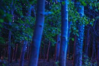 Last Rays of light, Somerset, Ian Wade
