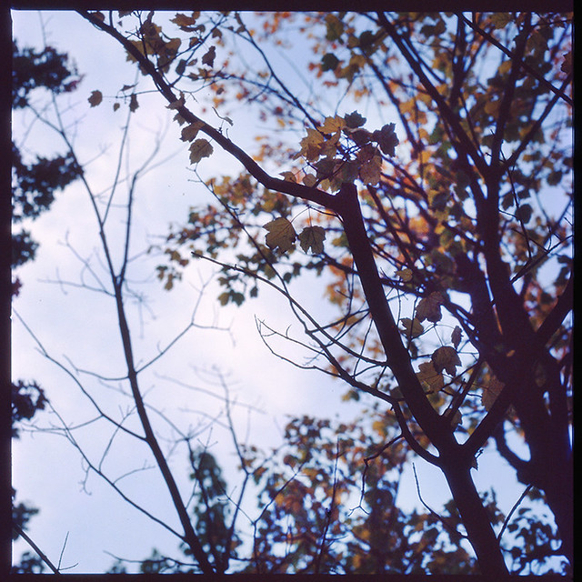 Leaves grow old III