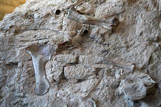 Dinosaur National Park Quarry Museum_1 | by chiapeteater