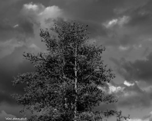 blackwhite monochrome clouds storm thunderstorm stormclouds nature bw blackandwhite