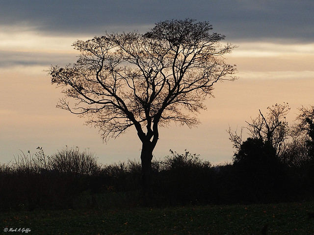 tree on my horizon