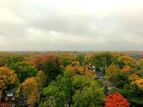 2017 fall november houses royaloak neighborhood trees suburbia