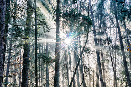 sunshine december natural sunrise sigma nature western canon pines light rays trees sigma35mmart sun canon7dmkii golden pennsylvania landscape fog foggy park county pa