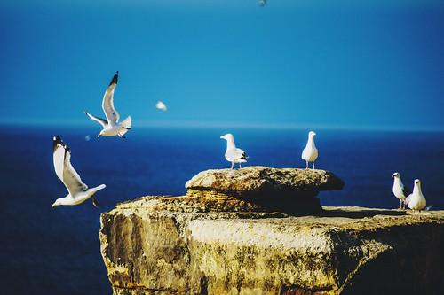 Gulls take flight at Pictured Rocks