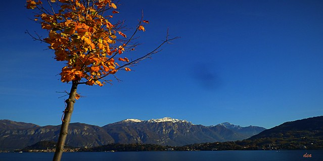 the autumn tree in the blue sky