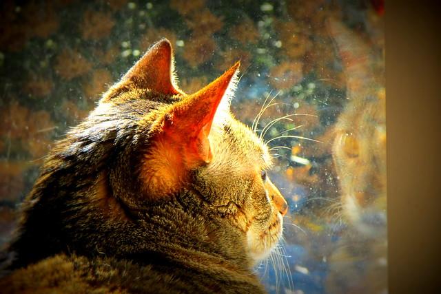 332/365 Cat Reflection