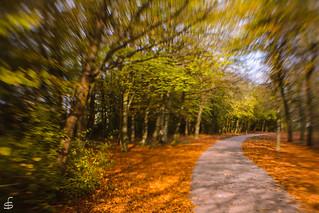 Autumn in between green and orange