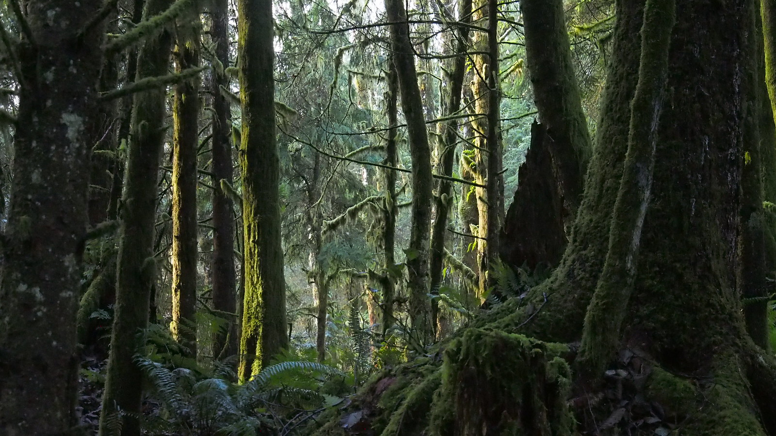 photo of forest vancouver island