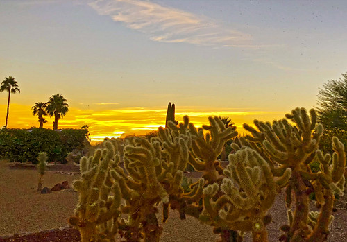 sky clouds threatening summer color colors muppets sunset arizona mybackyard cactus chollas silhouette outdoor skyline field landscape tree plant suncitywest