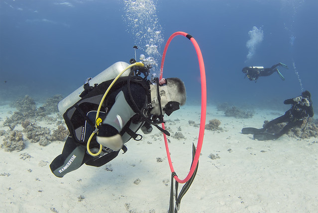 quadruple amputee man takes diving course 24