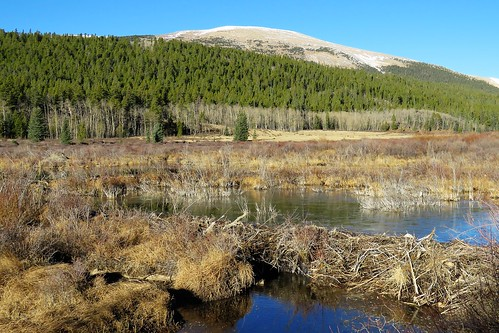 mosquito range mountain mountains fairplay colorado south park county 4milecreek road beaver dam pond wetland rocky pikenationalforest reflection autumn snow ice highcountry southpark