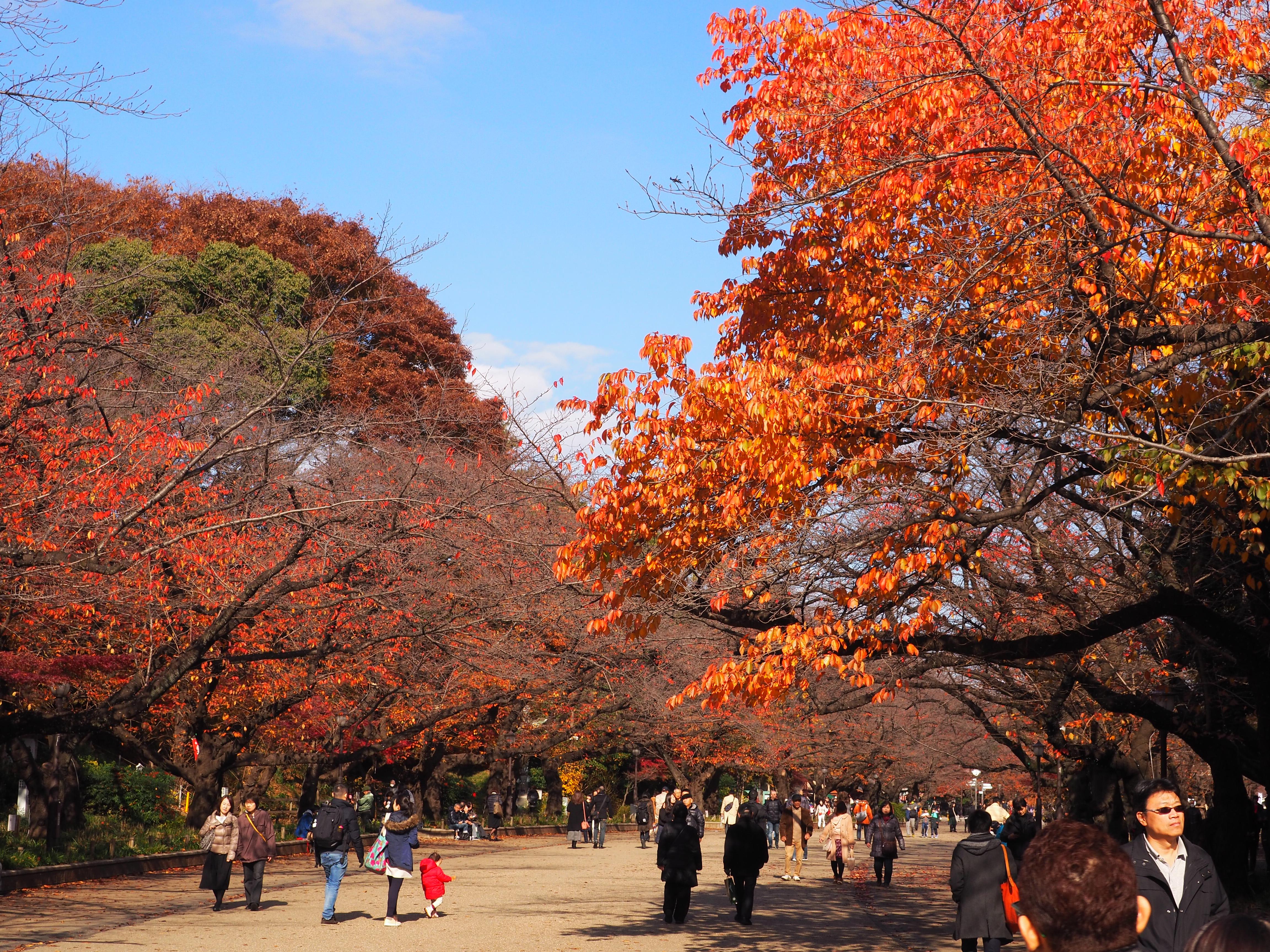 Tokyo (Ueno park)