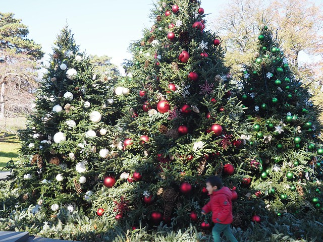 土, 2017-11-25 11:34 - New York Botanical Garden