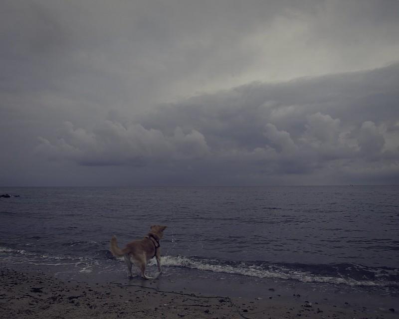 2013-09-11 um 18-43-22 - Hund spielt am Strand