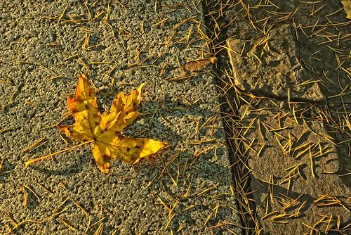 leaf autumn fallseason mapleleaf path portlandjapanesegarden shadows sunrise jchoate