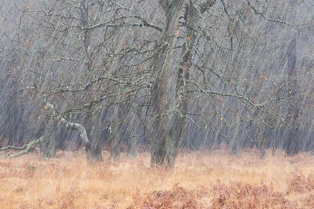 Barossa Snowstorm