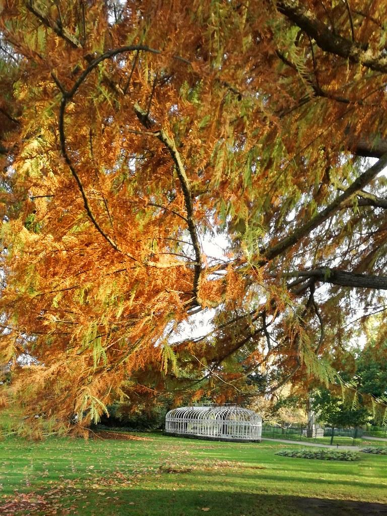 Jardin Botanique De Tours Pierre Bigot Flickr