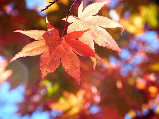 Leaves in Bokeh
