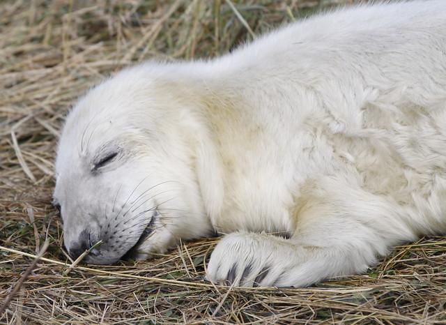 Asleep but dreaming.....!