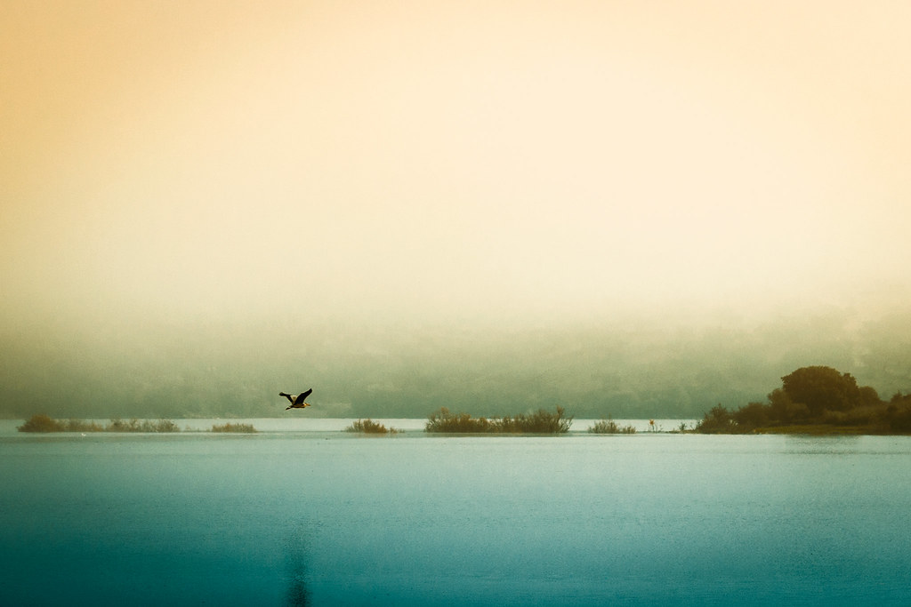 flying in the fog