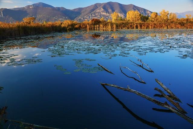 Lago di ninfee