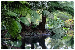 Tree Ferns and Pond   by Matthew.P.Wright