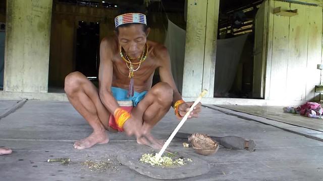 Shaman demonstrates preparing herbs / medicinal plants