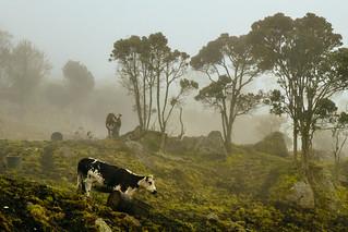 Countryside near Bogota, Colombia