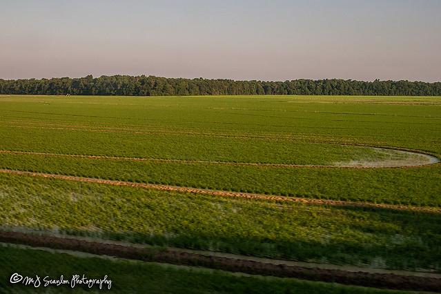 Amtrak's City of New Orleans I Mississippi Delta