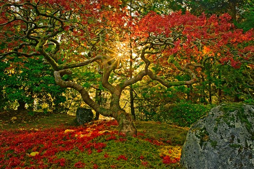 jchoate japanesegarden portlandjapanesegarden portland pdx tree maple autumn fallseason fallleaves sunrise sunstar colorful garden d610 on1pics hss