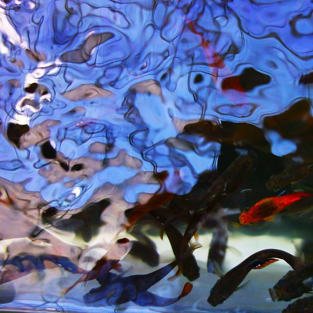 水様=Appearance of water-153/The complexity of water and fish