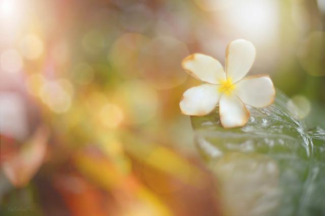 Christmas Flower...