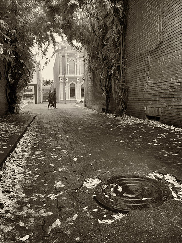 ian sane images alleyview sepia tones autumn fall leaves candid street photography downtown salem oregon alley storm drain manhole cover apple iphone 8 plus smartphone cell phone iphoneography phoneography