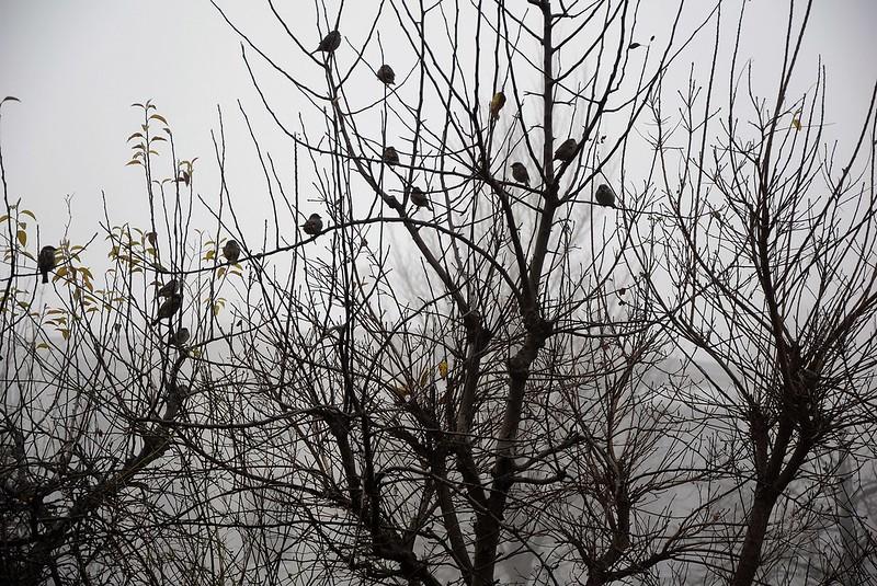 Sparrows 05.12 (1)