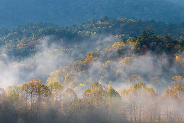 Autumn Fog in Smokies