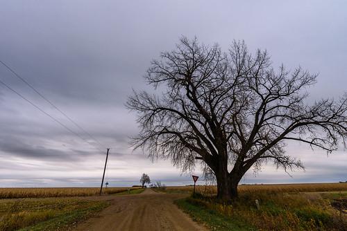 garvin minnesota autumn dirtroad fall farm farmland intersection powerlines rural yield balaton unitedstates us