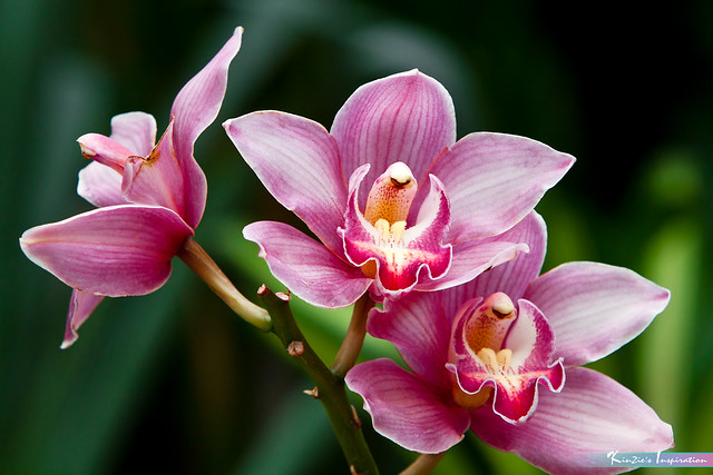 Smiling Orchids 😊 *Nature's Inspiration*