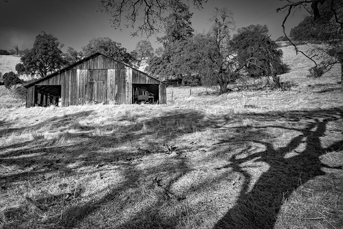 california amadorcounty amador barns blackandwhite bw trees shadows light autumn canon 7d leaningladder