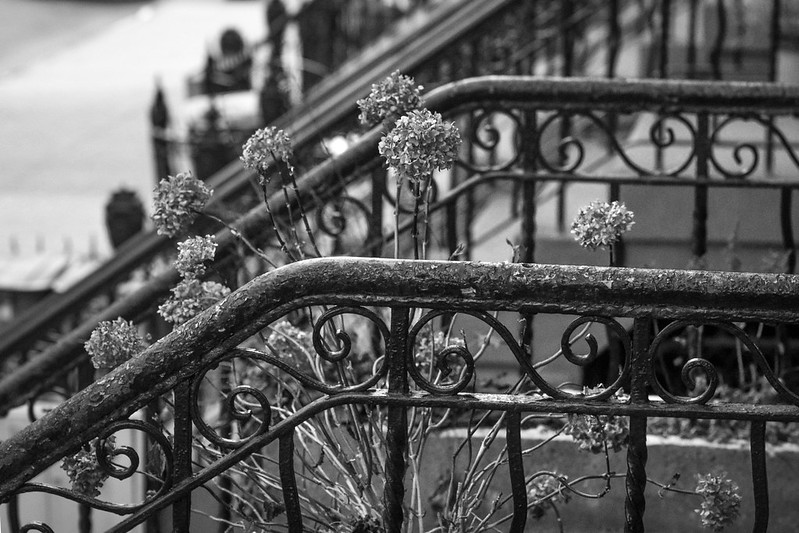 railings, front stoops, dried flowers, Jefferson Avenue, Bedford Stuyvesant, Brooklyn, New York, Nikon D3300, mamiya sekor 80mm f-2.8, 12.10.17