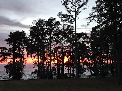 cypresstrees albemarlesound nc sunset