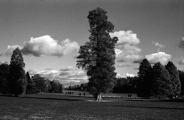 FILM - Big Tree