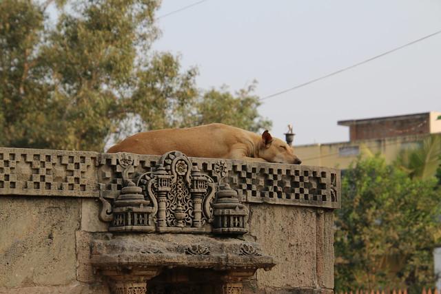 Visit to the Adalaj Stepwell near Ahmedabad, Gujarat, India (November 19, 2017)
