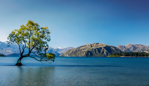 the wanaka tree  lake wanaka  new zealand