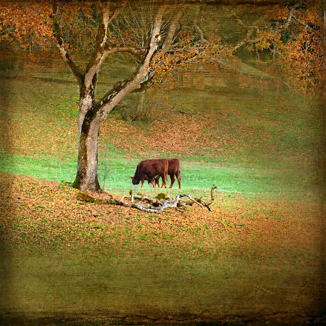 grass is always greener on the other side . . .