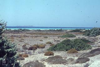 S W Sand flats. Mound of yellow Ononis natrix. Rhodes August